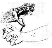 Надання першої допомоги при укусах змій